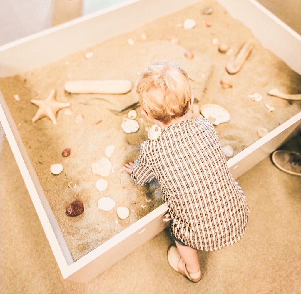 Buscando animales en el arenal de la playa